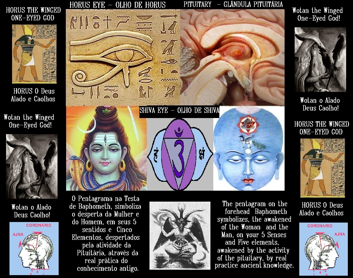 pineal gland � oogenhand